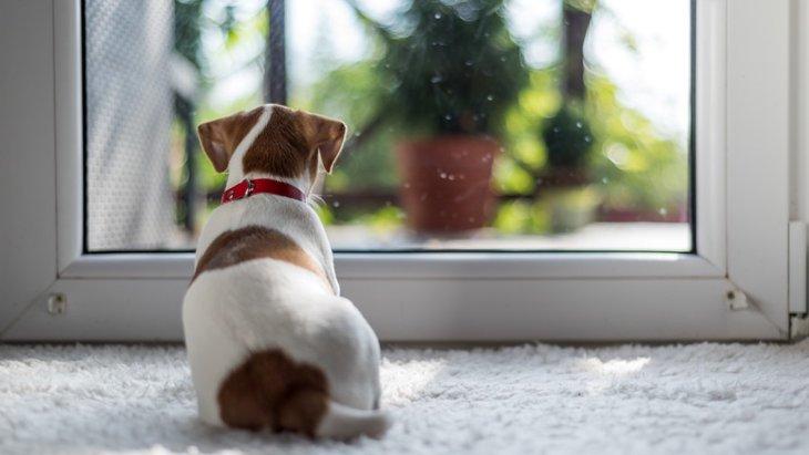 犬が家から外を眺めているときの心理4つ