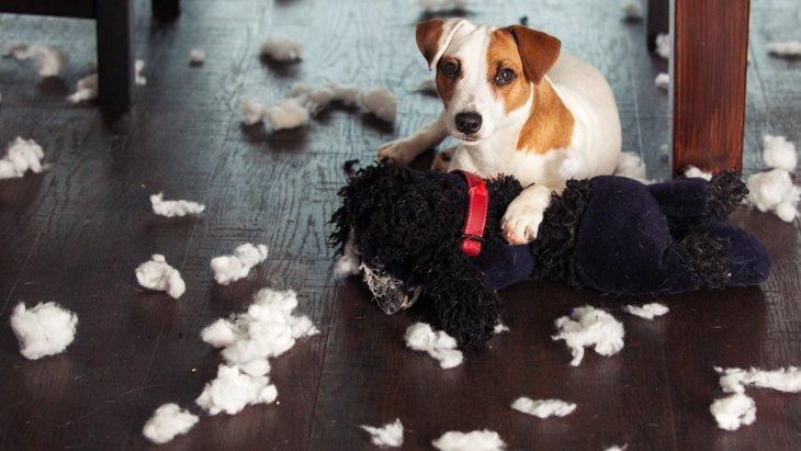 問題行動が多い犬にしてしまう『4つの育て方』