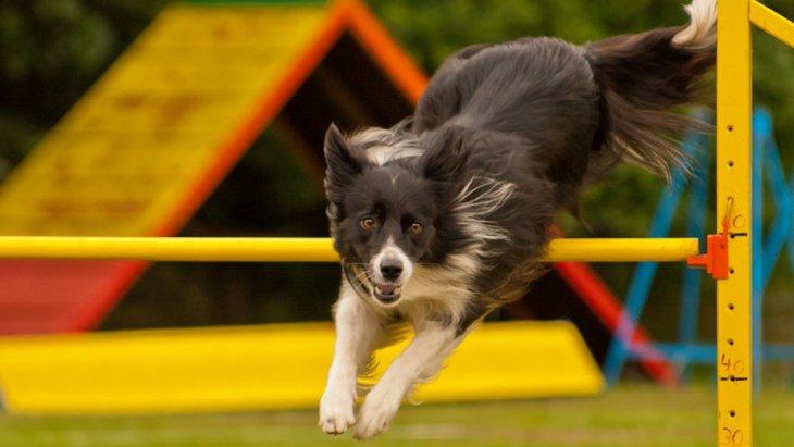 運動神経が良い犬と悪い犬の違い3つ
