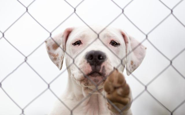 香りが保護施設の犬の行動を改善したという研究結果!