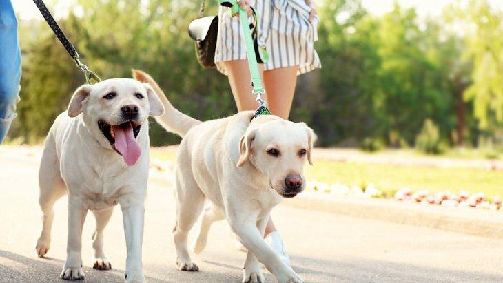 犬が散歩中に地面にある物を食べちゃう時のしつけ方