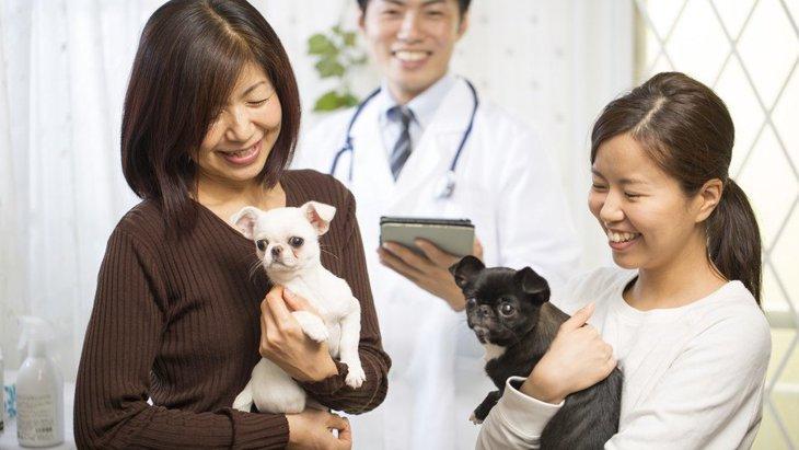 犬の扁平上皮癌(へんぺいじょうひがん)症状や治療法、末期の余命