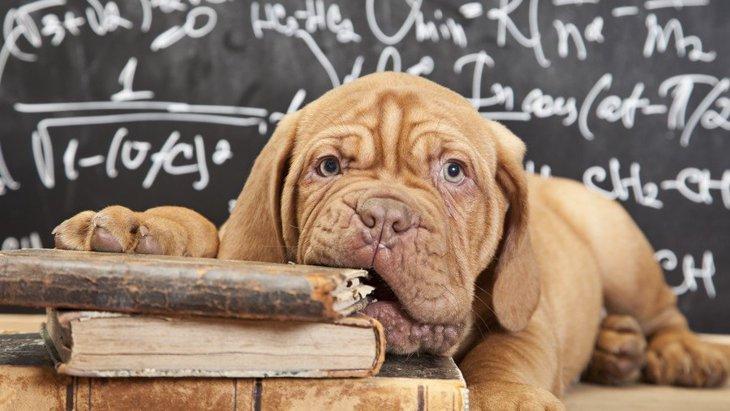 犬のゲノム改良版で様々な犬の病気の解明に期待!