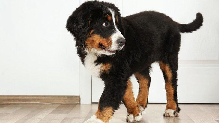 犬が落ち着けないNGな場所4選!寝床やトイレの位置をもう一度見直してみよう