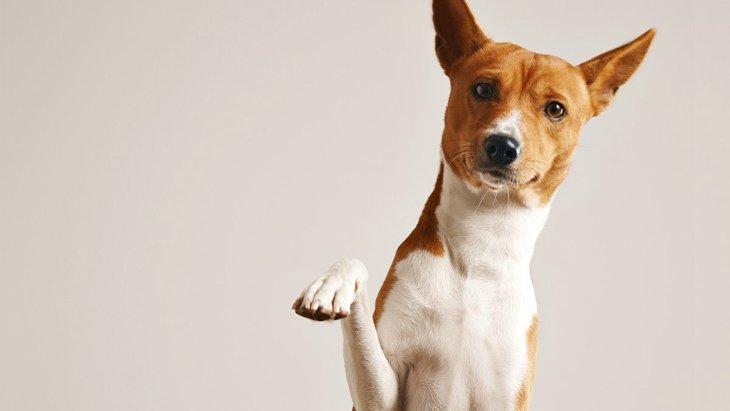 犬にも『利き足』がある?右利きか左利きか判別する方法6選