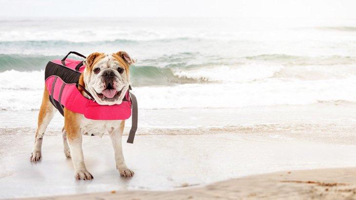 愛犬と一緒に海水浴を楽しみたいのなら戦に行くような気持ちで?