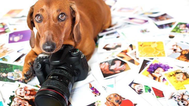 犬にカメラを向けると『目を逸らしてしまう』理由5選!上手に撮影するコツは?