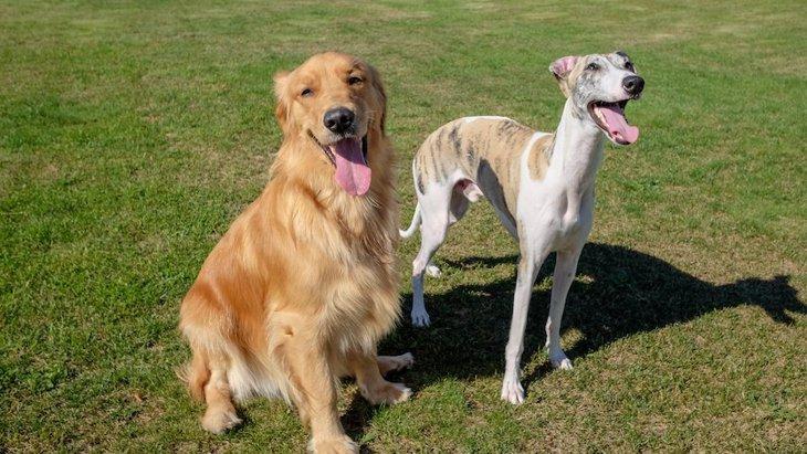 飼い主より力の強い犬を飼うべきではない?考えられる理由4つ