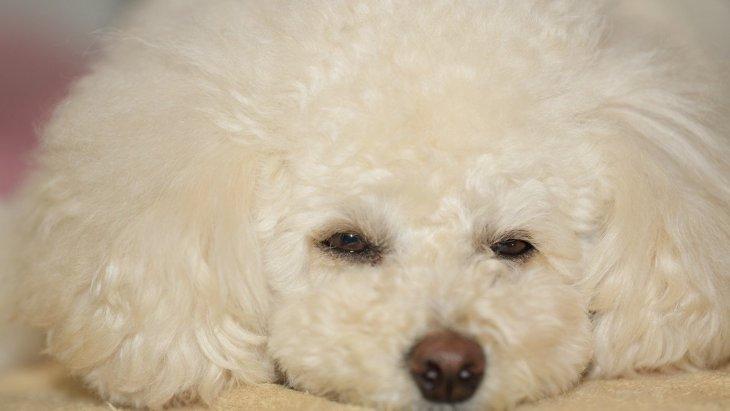 犬の『機嫌が悪い』時に絶対してはいけないNG行為5つ