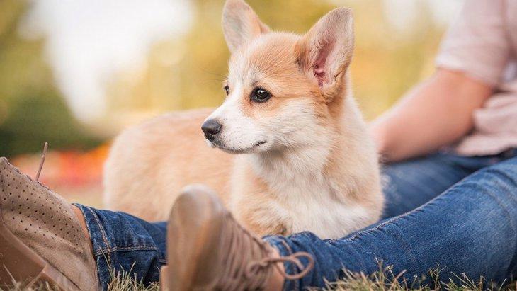 犬が飼い主にわざとぶつかってくる心理3つ
