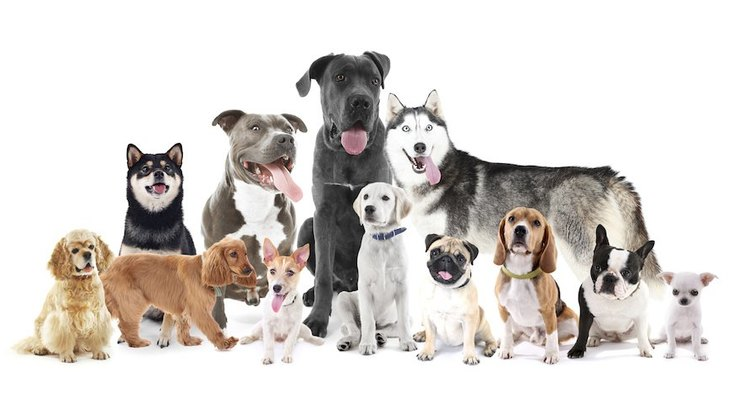 大型犬は小型犬よりも頭がいいの?