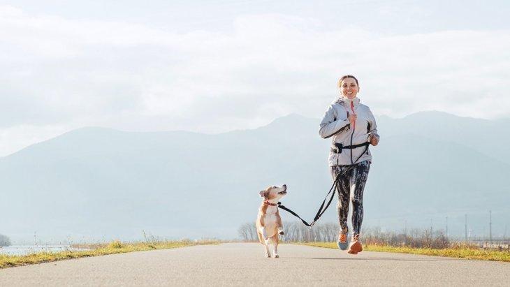 『たくさん散歩が必要』な犬種5選!時間の目安や足りない時のサインを解説