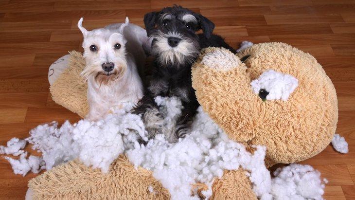 犬は見逃さない…!飼い主が作りがちな「イタズラチャンス」5選