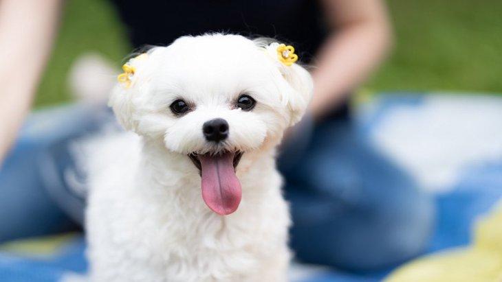 小型犬を飼う時に絶対してはいけないNG行為3選