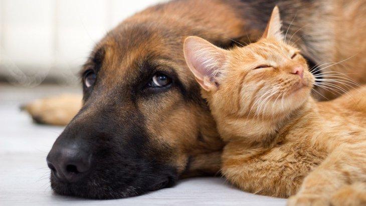 犬と猫の感情表現の違い7選