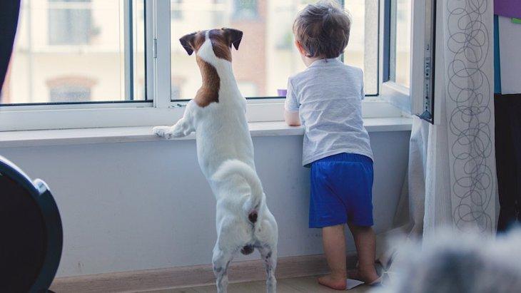 なぜ人は犬を飼いたくなるのか?3つの心理と飼う前の注意点
