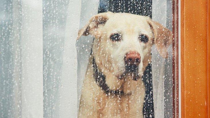 犬が天気の悪い日によくする反応4つ