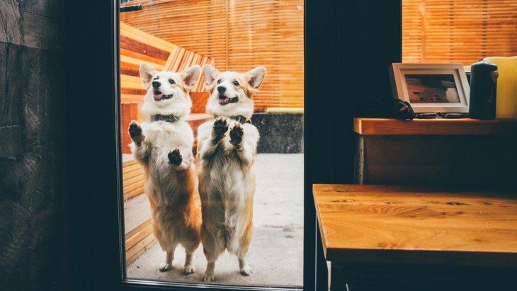 犬同伴可能な飲食店でも必ず守りたいマナー3選