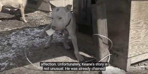 鎖につながれたまま皮膚病をわずらった犬が、ついに家族の一員に!