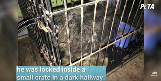 檻に閉じ込められていた小型犬のビフォーアフターがすごい!