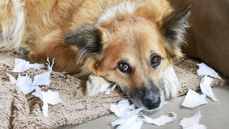 犬に構いすぎるのがNGな理由3選!愛犬にとってはストレスになっているかも?