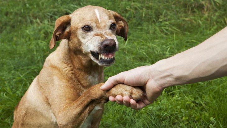 犬に敵意を持たれてしまう人の特徴5つ