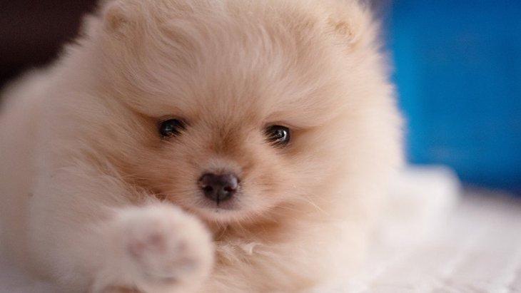 犬の『肉球』の役割4つ!なぜ犬には肉球がついているの?