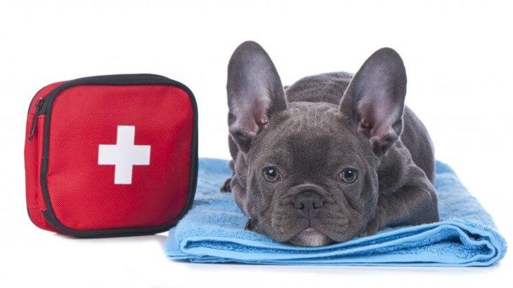 犬のリンパ腫の正しい知識 症状や原因、治療法まで