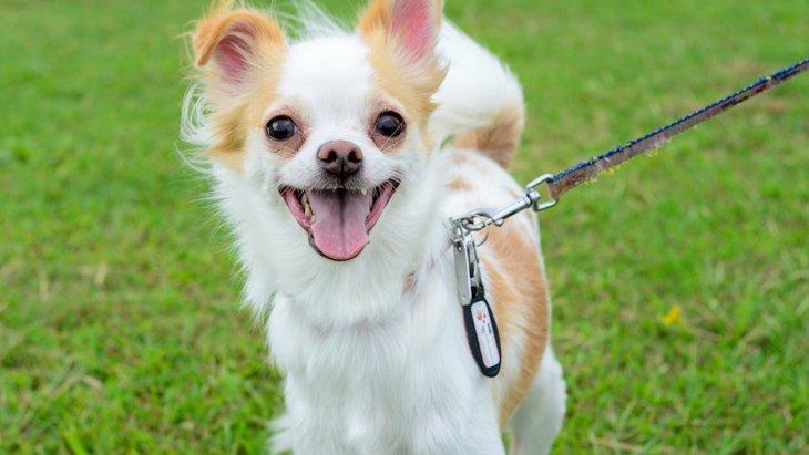 犬が口を震わせる時の心理4つ