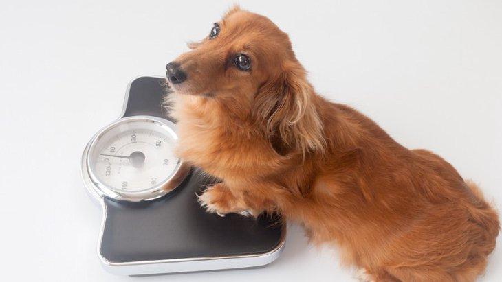食欲は犬の体調のバロメーター!体重と食欲の増減が比例しない時の危険