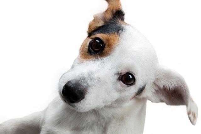 コンピューターゲームで犬の脳と精神に刺激を!というマジメな研究
