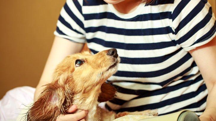 子犬が臭い匂いになる理由!原因や対処法について