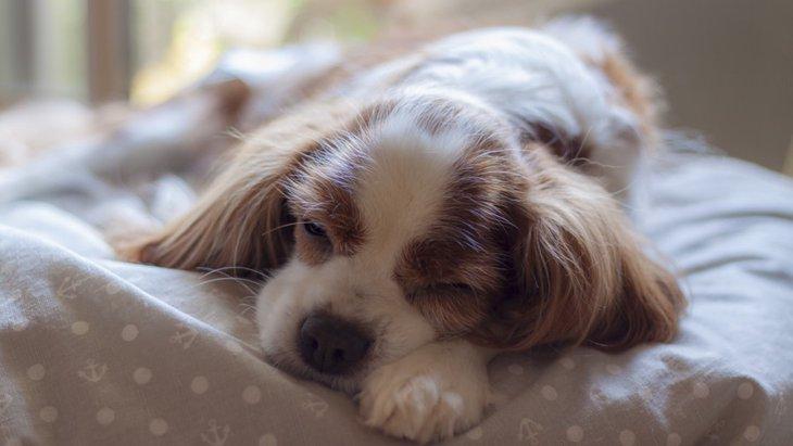 犬の寝相で分かる安眠度