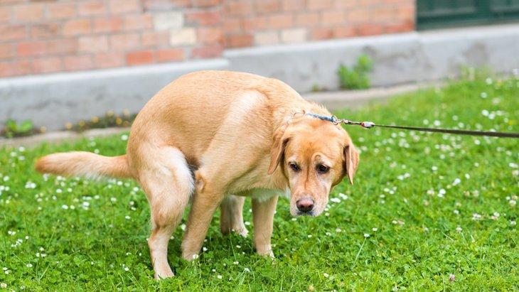 犬がウンチするまでに時間がかかる5つの理由