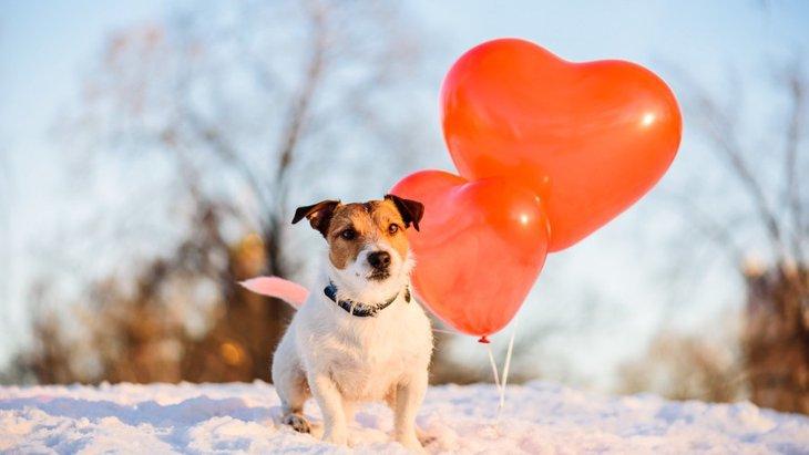 今日は何の日?犬にまつわる記念日10選