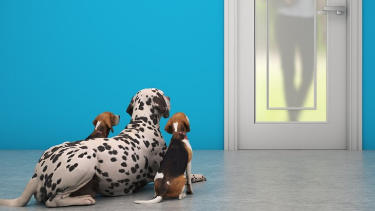 犬は『飼い主の帰宅時間』を理解している?