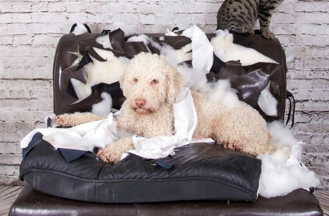 犬がソファーや家具を破壊するのはなぜ?どうすればおさまるの?