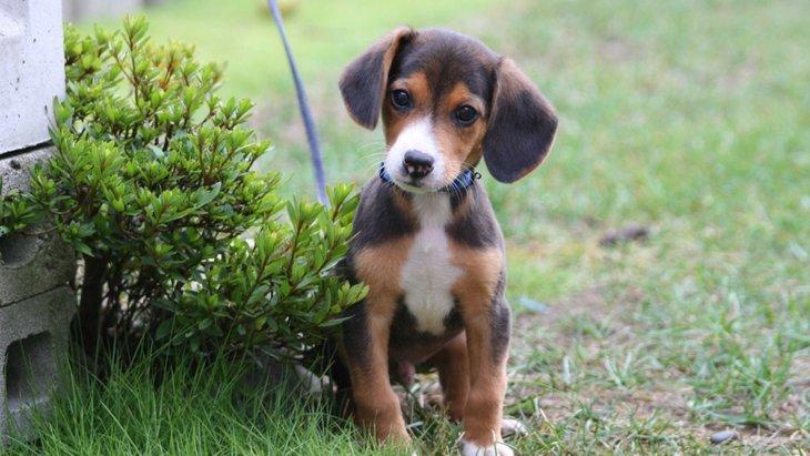 愛犬と一緒に生活するうえで困る問題行動とは?
