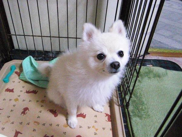 うちの子が一番可愛い!愛犬フォトギャラリー(1)