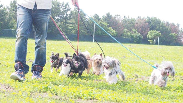ペットショップが聴導犬の育成に協力! ペッツファーストの聴導犬育成プロジェクト