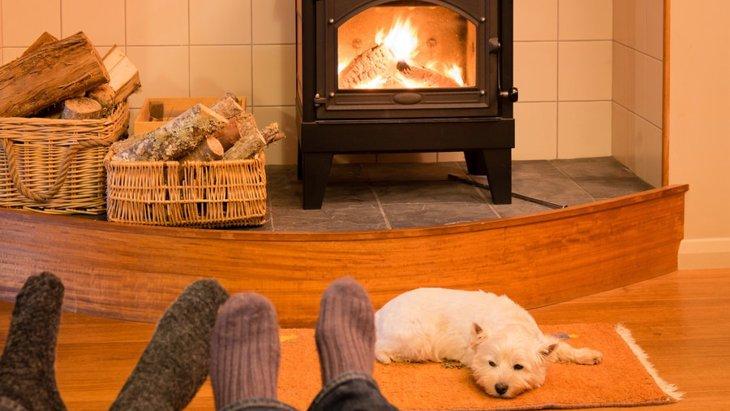 犬が冬にお留守番している時につけてはいけない4つの暖房器具
