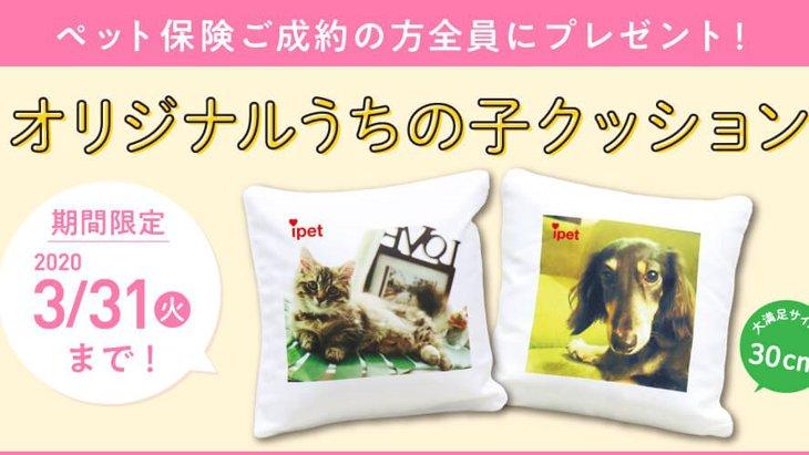 【クッションプレゼント】ペット保険ご成約で豪華Wキャンペーン