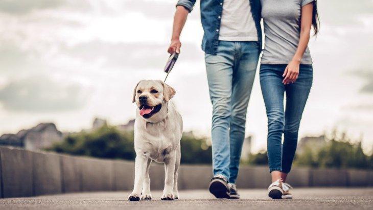 犬を飼うことがメンタルヘルスに好影響、でも単身者には当てはまらない?