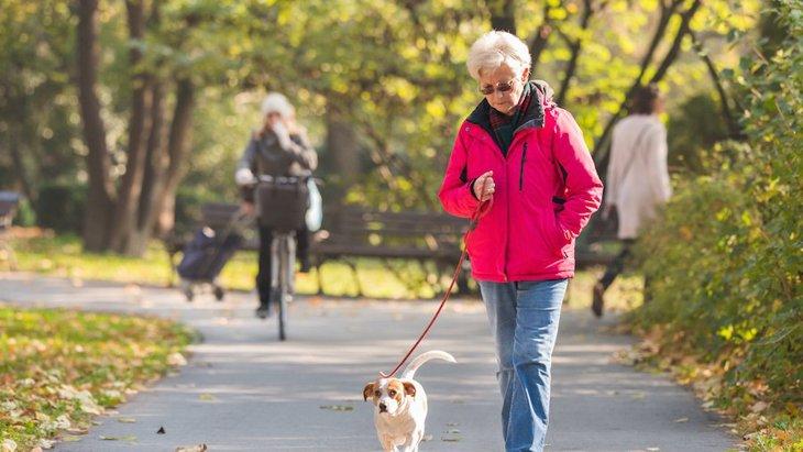 犬の散歩に関連した高齢者の骨折が増えている【米国のリサーチ】