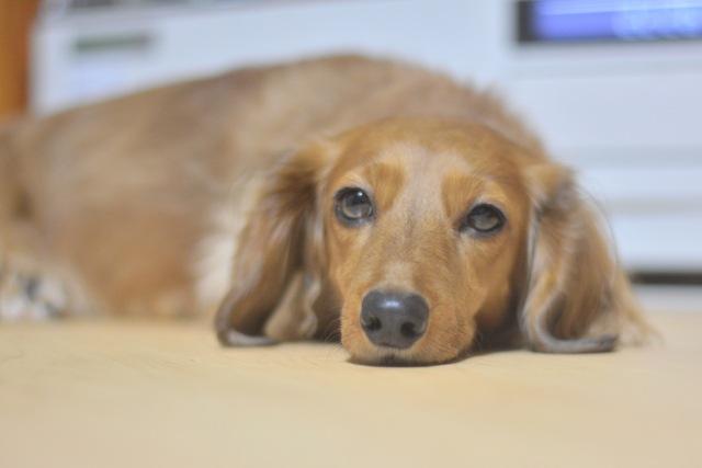 犬がぎっくり腰になる原因・症状から予防法まで