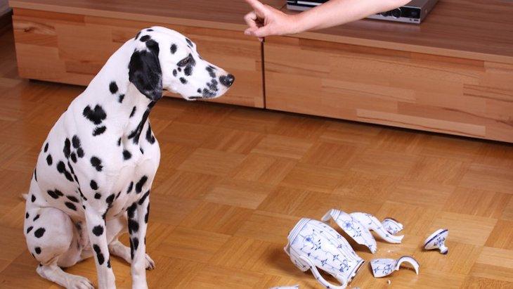 犬の長期記憶と短期記憶!どのくらい前のことまで覚えているの?