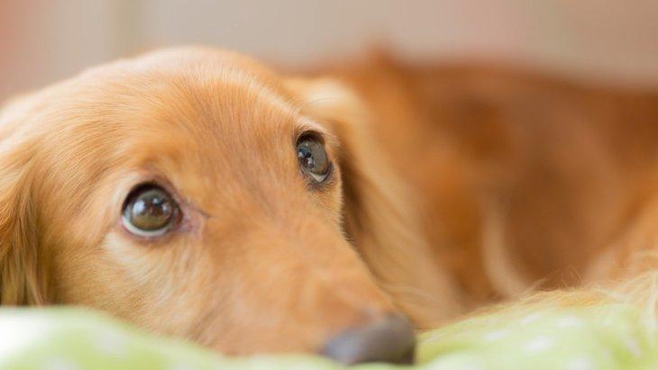 犬の『構ってアピール』の対処法とは?