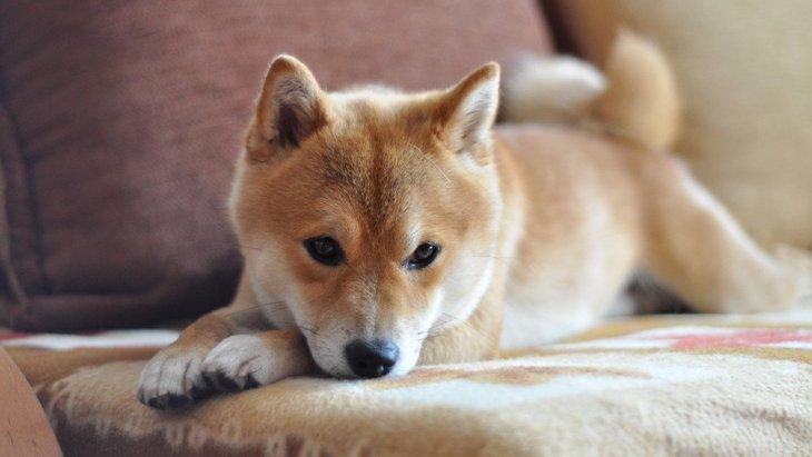 犬がいたずらがバレたときに誤魔化そうとする時の行動4つ