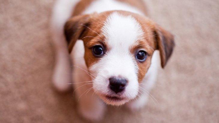 犬が飼い主に向かって喋っている時の心理3つ