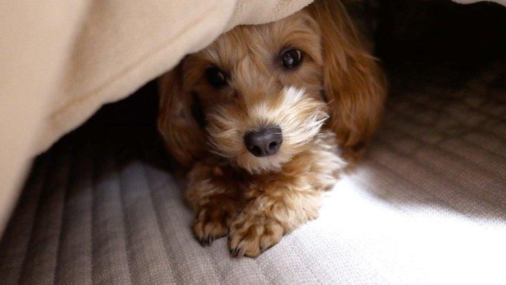 犬の飼い主がコタツを使う時に絶対してはいけないNG行為4選
